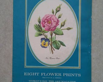 """Eight Flower Prints Second in A Series - Woman's Day The A&P Magazine Reproductions - 11 1/4"""" x 8 1/4"""""""