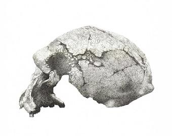 Homo erectus print