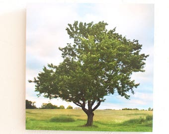 Season of Shaw Tree Summer Print 5x7 8x10  Standout 10x10 12x12