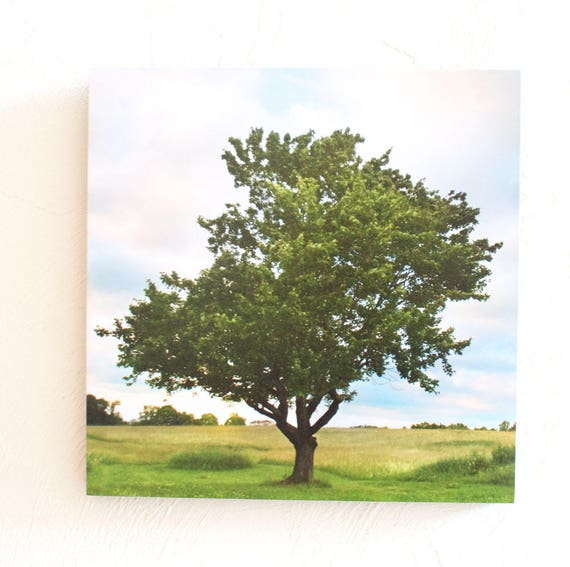 Season of Shaw Tree Summer Print 5x7 8x10  Standout 10x10 12x12