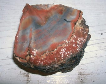 Arizona Rainbow Petrified Wood, over 1 lb, 556g, raw wedge with bark, cabbing, lapidary, jewelry supply,  fantastic colors!  Large piece