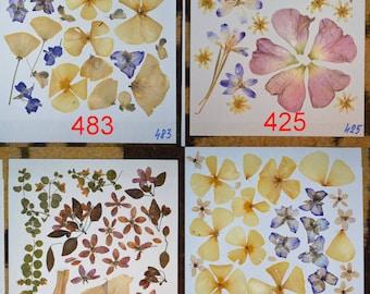 Pressed flowers / oshibana assortment - Dried Pressed Fern Leafs, Real Green Fern Leafs, Pressed Fern. pressed foliage.  #483 #425 #442 #484