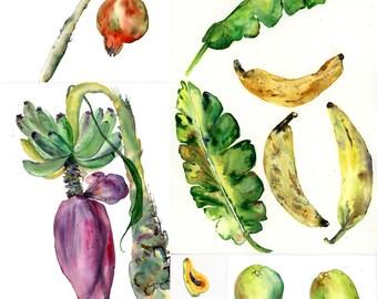 5 exotic fruit POSTCARDS, a set of 5 Unique postcards from wonderful watercolour illustrations,watermelon, banana flower, mango, pomegranate