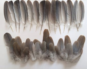 Lot of +30 natural Gray / Brown feathers