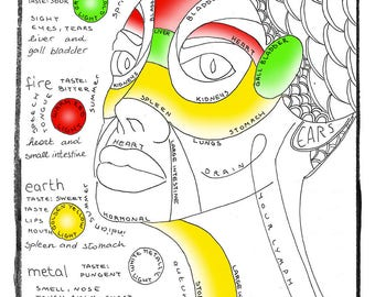 TCM Facial Reflexology and the 5 elements - Cute Adult Coloring Meditation