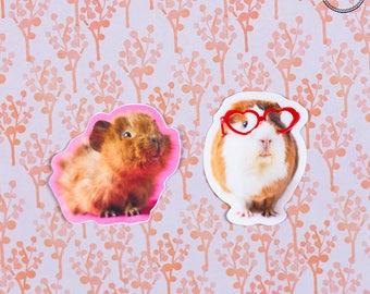 Guinea Pig Vinyl Stickers (2 stickers)