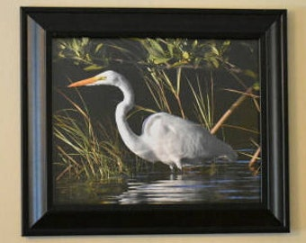 Great Egret Framed Original Photograph 8 x 10