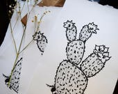 LIMITED EDITION - Cactus Print