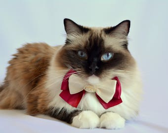 Fancy Cat Bow tie with Collar - Christmas cat bow tie with adjustable collar - Luxury satin bow tie with breakaway collar
