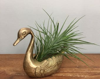 Brass Swan Planter - Boho Jungalow Indoor Garden Home Decor For Air Plants or Succulents