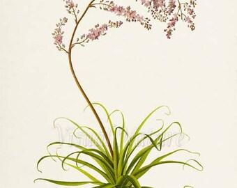 False Agave Flower Art Print, Botanical Art Print, Flower Wall Art, Flower  Print