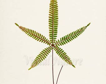 Lip Fern Art Print, Botanical Art Print, Fern Wall Art, Fern Print, Botanical Print, Home Decor, green art print