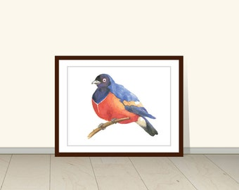 Superb Starling Bird Print, Watercolor Painting, Animal Art,  Watercolor Illustration, Wall Art, Wall Decor, Bird Art, Bird Print, Wildlife