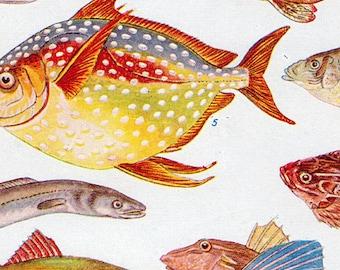 Set of Four Vintage Fish Charts #2