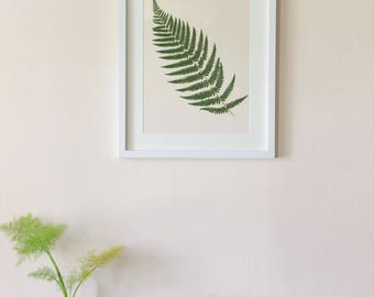 Real pressed fern
