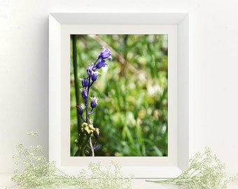 Interior wall decor Bluebells Floral print 8x10 Nature photography Blue green picture Pictures online Wall art decor Flowers poster Digital