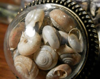Pendant filled with real Snail shells