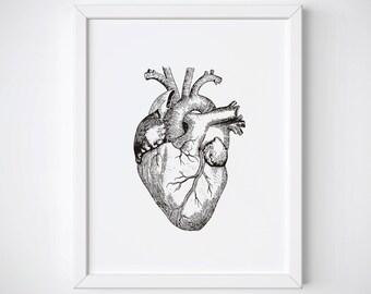 Anatomical Heart Print, Human Heart Anatomy Print, Heart Illustration, Heart Anatomy Print, Vintage Medical Illustration, Heart Wall Art