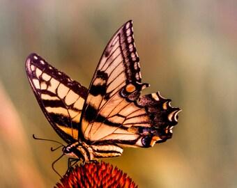 Butterfly photo, butterfly wall art, butterfly print, butterfly photography, butterfly fine art, butterfly art, colorful butterfly art