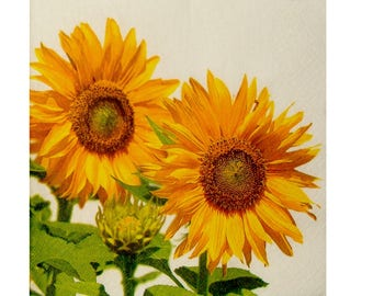 Set of 3 napkins PLA039 sunflowers background cream