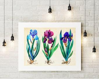 Iris Poster, Iris Art Print, Botanical Print, Iris Painting, Iris Picture, Flower Print, Iris Wall Art, Watercolor Iris, Flowers Home Decor