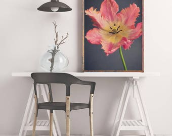 Parrot Tulip Art Print, Large Photography Print, Tulip Wall Art Print, Botanical Print, Floral Art Print, Flower Photography, Large Wall Art