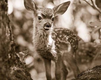 FAWN PHOTO Sepia Print, Baby Animal Photograph, Woodland Nursery Art, Deer, Safari Nursery Decor, Kids Room Decor, Woodland Baby Shower, Zoo