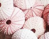 Pink Sea Urchin Shells Natural Pastel Urchins Seashells DIY Beach Wedding Decorating Sea Life Supplies Coastal Decor Arts Crafts Collections