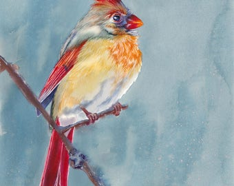 Cardinal Bird Watercolor Fine Art Print on Paper, Metal, or Bamboo