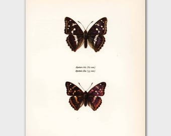 """Butterfly Wall Art (Vintage Butterflies Print, 1960s Home Office Decor) --- """"Male and Female Admirals"""" No. 110-1"""