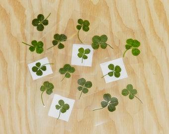 Real 4 leaf clover, Real four leaf clover gift, Pressed four leaf clover, Preserved four leaf clover, Token of good luck, Real shamrock
