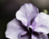 Lavender Flower Photograph Abstract Nature Photography 2017