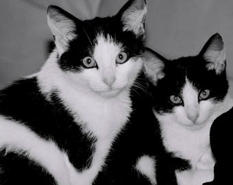 Black and White Animal Collection - Kitten Brothers