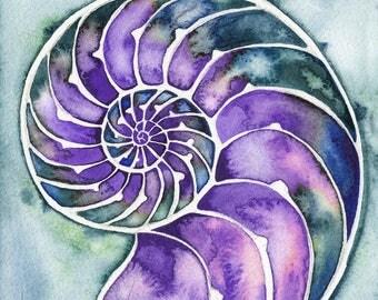 4 PRINTS - Special Nautilus Watercolour Print Order