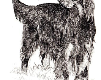"8x10 Pen & Ink print, ""Gordon Setter"",   free shipping to Canada and U.S.A., hand drawn, dog art, Heather Anderson"