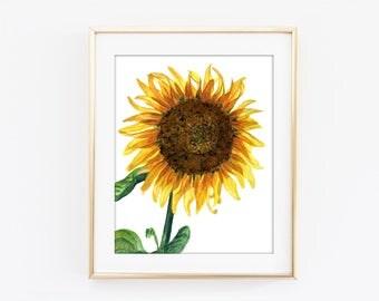 Sunflower Watercolor Art Print, Botanical Digital Prints, Flower Wall Art, Watercolour Sunflower Print, Printable Sunflower Poster #17