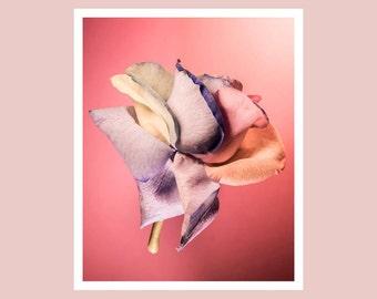 Pink rose print, flower photography, little girl room wall art, fine art photography, pretty rose print, floral photography, nursery decor