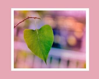 Leaf photography, leaf print, nature wall art, fine art leaf photo, leaf wall art, nature lover gift, pretty leaf print, leaf wall decor