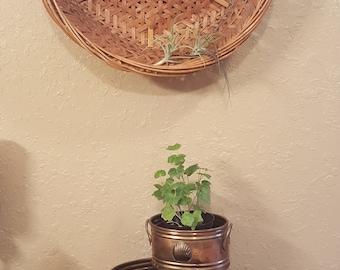 Set of 2 vintage brass oval planters, shell design, patina, boho,