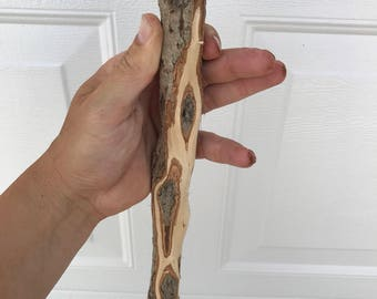 Diamond Willow (45+ D's, CARVING BLANK) Walking stick, trekking pole, hiking staff, wood cane, twisted, woodworking, scout
