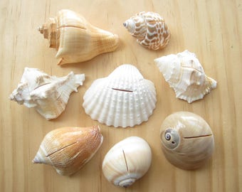 assorted sea shell place card holders8 piecesbeach wedding party