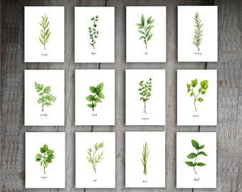 Kitchen Herbs Watercolor Illustration Art Print Set of 12 Printable Instant Download Kitchen Signs
