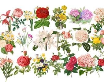 Flower Clipart, Meadow plants clipart , Herbarium Illustration , Flowers Illustration , Herbarium clip art, Rose Clip Art, Vintage Graphics