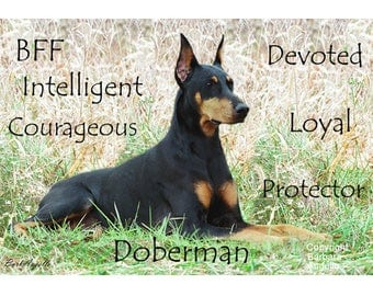 Doberman, Doberman Gift, Doberman Art, Doberman Metal Art Print, Doberman Traits