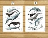 "American sizes, Whales Poster, Watercolor Illustration, Giclée Print, Wall Art Decor, Home Decor, Nursery Decor, Poster, 8.5""x11"", 13""x19"""