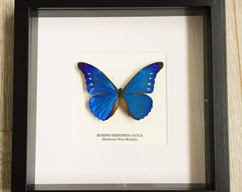 Rhetenor Blue Morpho Butterfly Frame