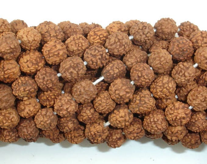 Rudraksha Beads, 7.5mm-8.5mm Round Beads, 32-35 Inch, Full strand, 108 Beads, Mala Beads (011731001)