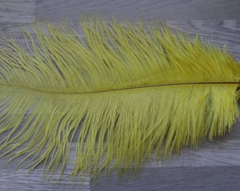 Colorful yellow set of 2 natural ostrich feathers