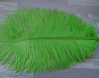 Set of 2 natural ostrich feathers colorful Apple green