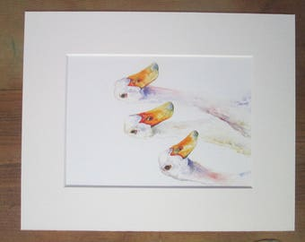 Ducks, Geese, watercolour print in a 10 x 8 mount, ready to pop into a frame.
